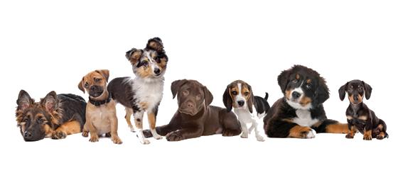 Anna Frick – Hundpsykolog