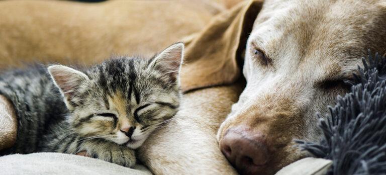 Ta med hund eller katt till Spanien