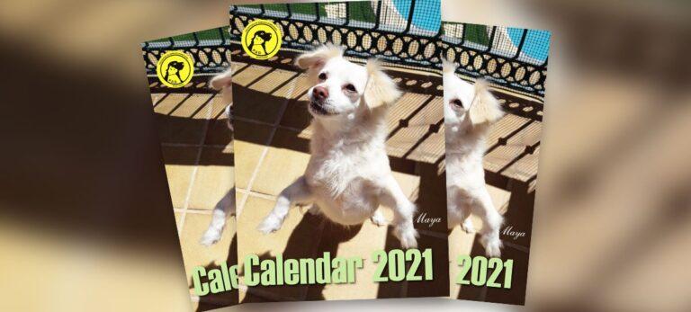 Den nya P.A.D.-kalendern är färdig, så var redo för 2021 och hjälp djuren på samma gång!