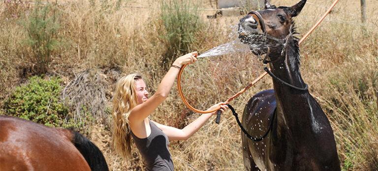 Upplevelser på hästryggen – ett annorlunda sätt att uppleva naturen på