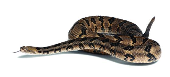 Ormar – och vad?