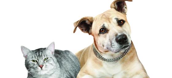 Nya rön om djurs foder, fetter och fettsyror