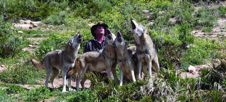 Daniel  European wolves 13
