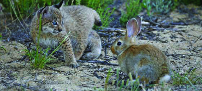 Los og kanin