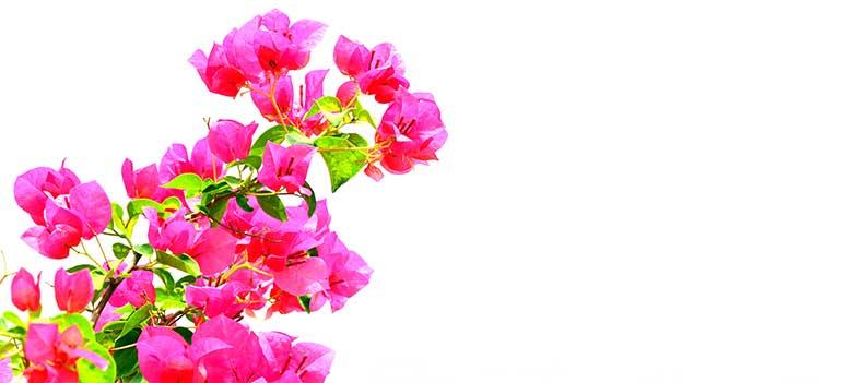 Malaga blomster