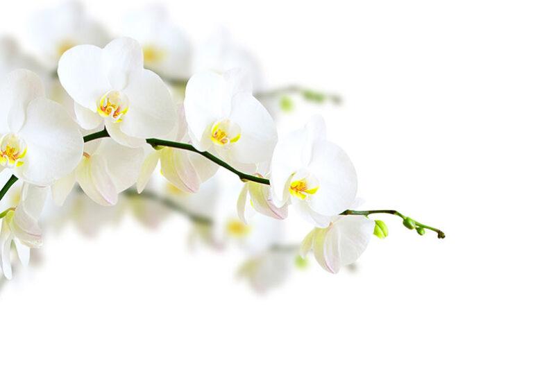 Besök Europas största orkidarium i Estepona