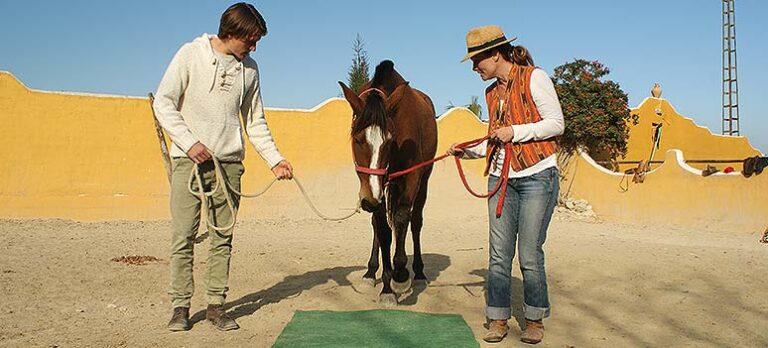 BodyTalk – om familjeterapi med hästar