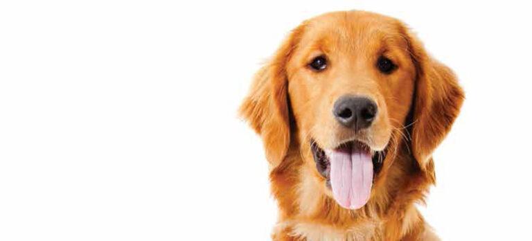 Ny giktbehandling kan hjälpa hundar på fötterna igen