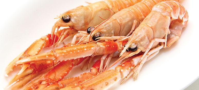 mad-havkatter