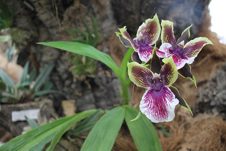 orkidarium Estepona2