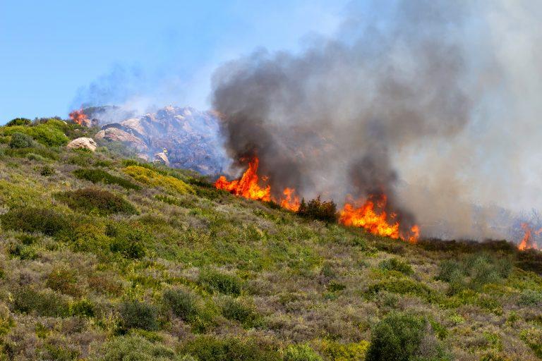 Skogsbränder i Andalusien slukar 1 000 hektar på 4 dagar