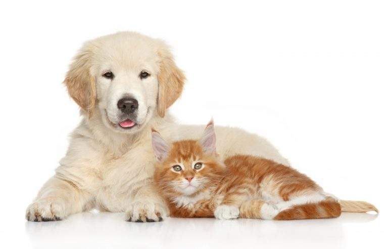 Sommaren är här! Är ditt husdjur förberett?
