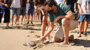 Sköldpaddor utsläppta i havet vid Los Boliches