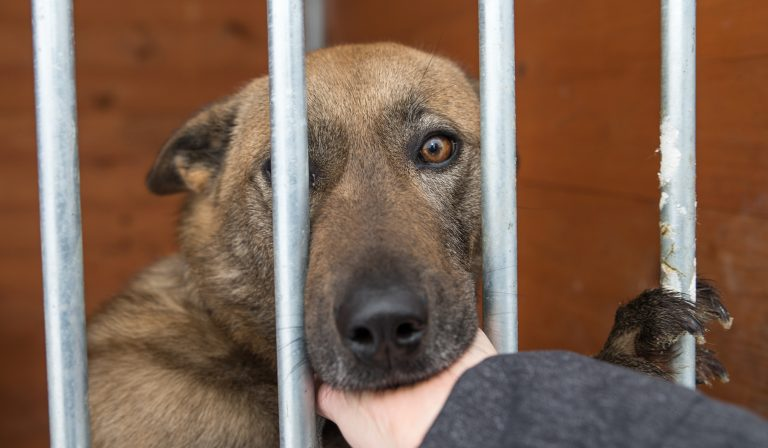 Varje timme överges ochippade hundar i Spanien