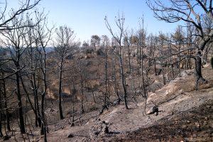Ny rök- och nödfas i Sierra Bermeja